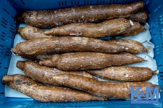 Waiting-cassavas